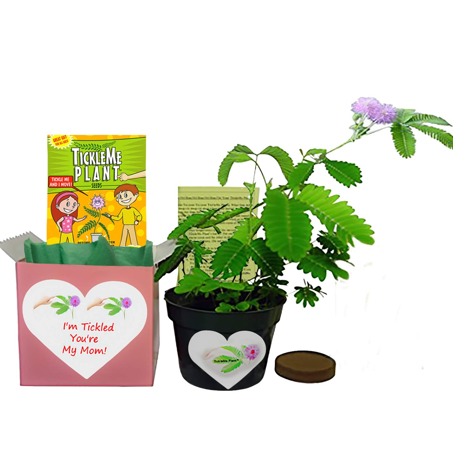 Mother's Day/Birthday TickleMe Plant Gift Box Set - To grow the Plant that closes its leaves when you Tickle it or blow it a Kiss! It even grows Pink Flowers! ''I'm Tickled You're My Mom! by TickleMe Plant