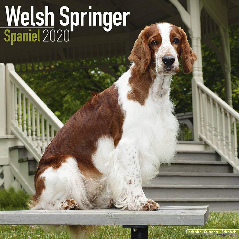 Welsh Springer Spaniel Calendar 2020