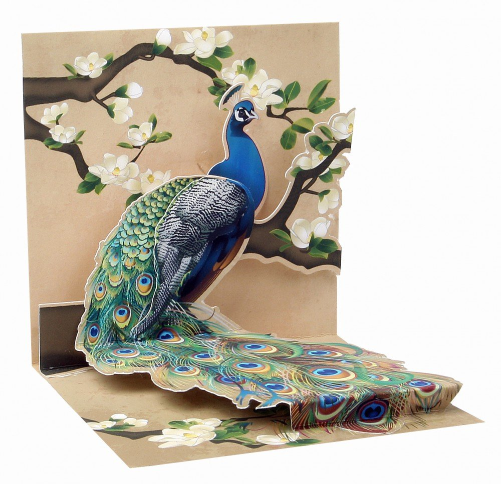 3D Pop Up Peacock Magnolias Mini Gift Card Amazoncouk Kitchen Home