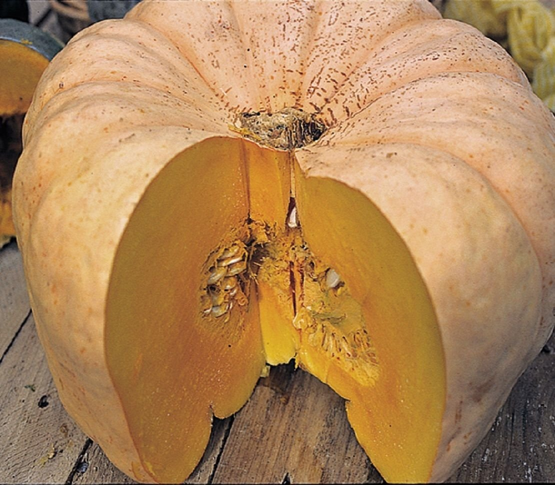 Heirloom AUSTRALIAN BUTTER SQUASH Rare❋12 SEEDS❋Tasty Quality❋ by Unknown