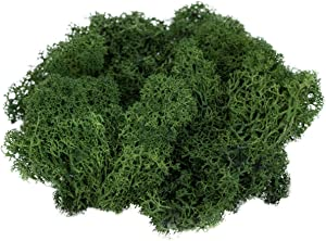 Reindeer Moss Preserved | 2 Ounces of Forest Green Colored Moss | Spring Green Moss for Fairy Gardens, Terrariums and Any Craft or Floral Project | Plus Free Nautical eBook by Joseph Rains