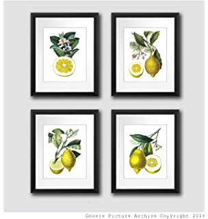 Lemons Kitchen Wall Decor Set Of 4 Unframed Yellow Lemon Citrus Fruits Botanical Art Prints