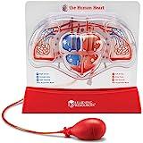 Learning Resources LER3535 modelo de coração de bombeamento, auxílio ao ensino, conjunto de demonstração multissensorial para