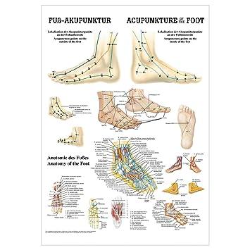 Fuß-Akupunktur Mini-Poster Anatomie 34x24 cm medizinische Lehrmittel ...