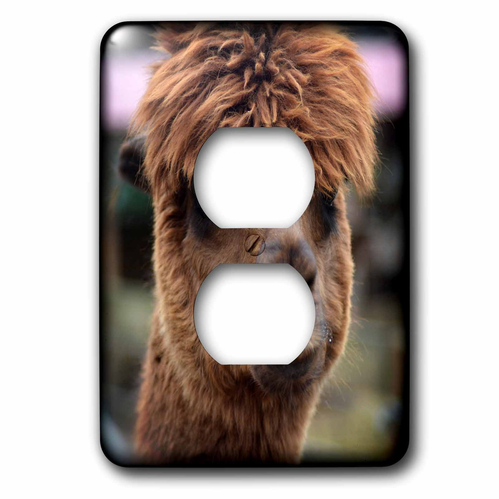3dRose WhiteOaks Photography and Artwork - Lamas - What a Hair Day is a photo of a lama having a bad hair day - Light Switch Covers - 2 plug outlet cover (lsp_265351_6)