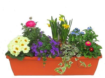 immergrünes Balkonpflanzen Set für Balkonkästen ab 60 cm