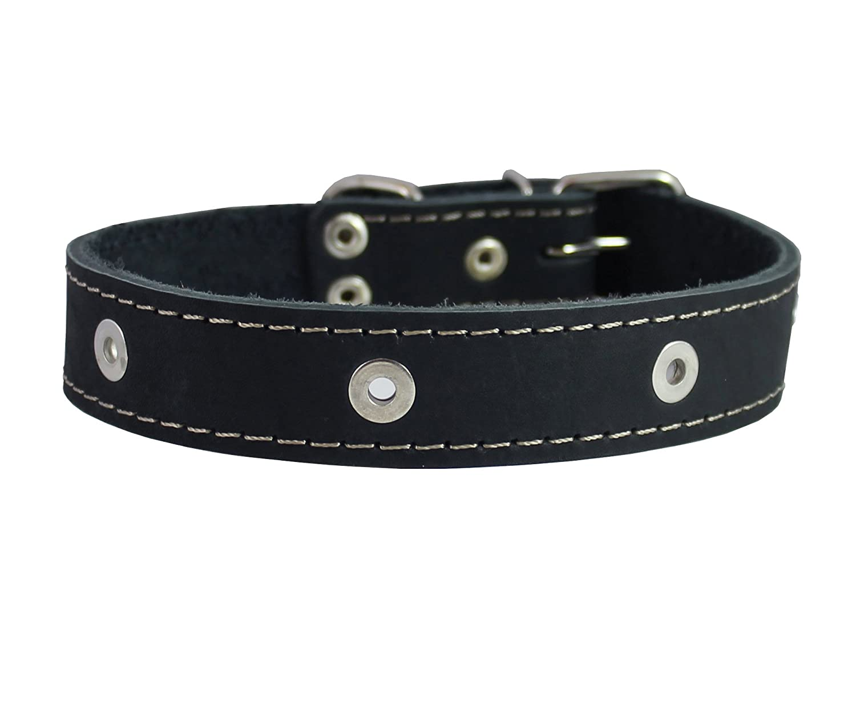 Genuine Leather Studded Dog Collar, Black, 1.5  Wide. Fits 16.5 -20  Neck Size Amstaff