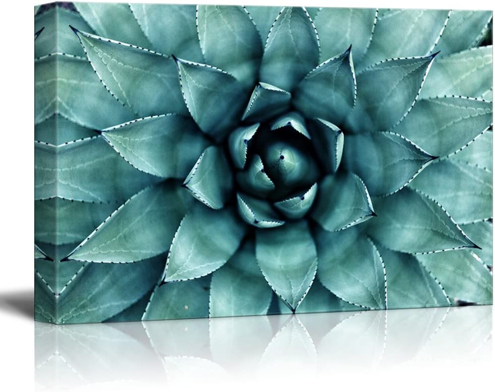 "wall26 - Closeup Teal Succulent Plant Gallery - Canvas Art Wall Art - 16""x24"""
