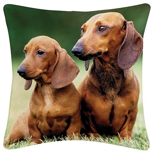 De cabeza de perro salchicha/almohada cojín (40,64 cm x 40 ...