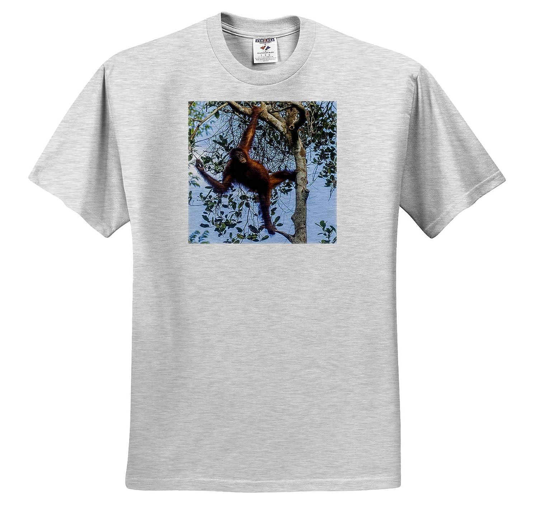 3dRose Danita Delimont ts/_312729 Borneo Indonesia Adult T-Shirt XL Kalimantan Female Orangutan Orangutans