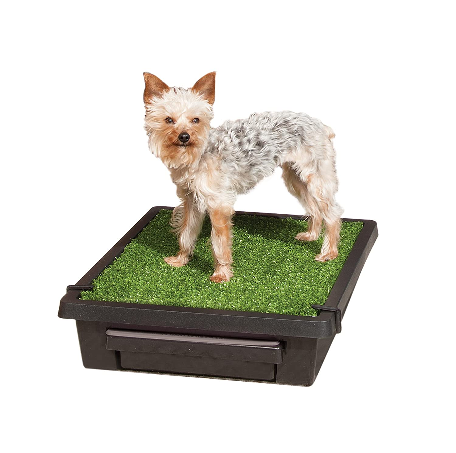 PetSafe Pet Loo Portable Indoor/Outdoor Dog Potty, Alternative to Puppy Pads, Small Waste Management PWM00-14497