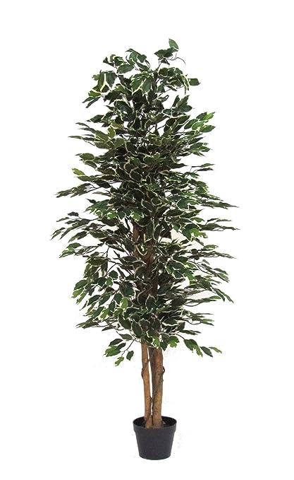 Verdevip Ficus Benjamin Variegato   Albero Artificiale Da Arredo Interno  Con Tronco Vero   Alto 150
