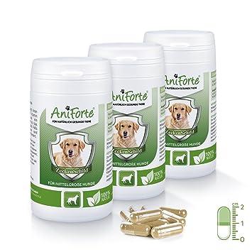 AntiGarrapatas para Perros Medianos (10-35 kg) - 3 x 60 cápsulas (Pack Ahorro) | Producto 100% Natural | Vitamina B Anti Garrapatas: Amazon.es: Productos ...