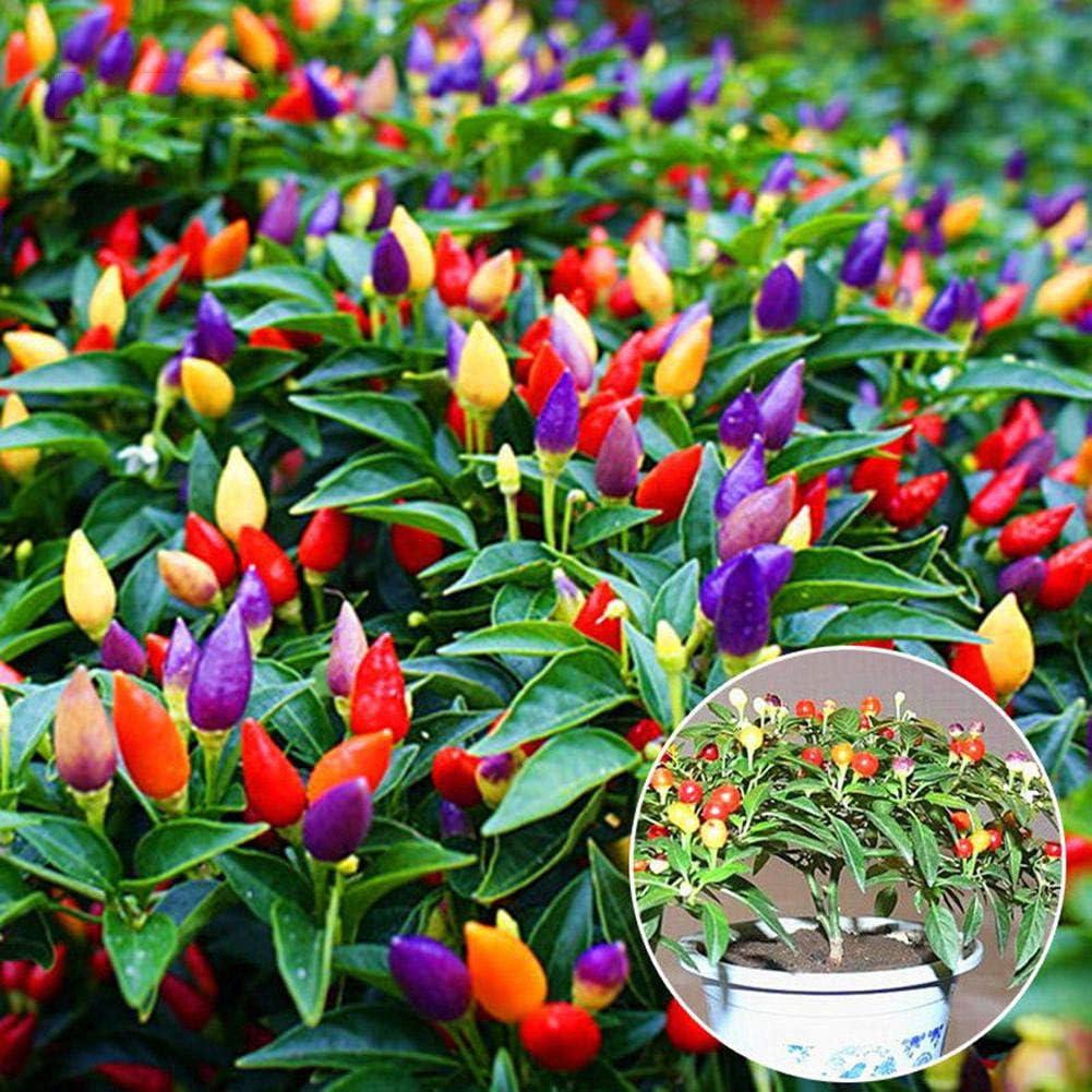Centraliain Semillas De Chile, 70 Piezas Mezclas Color Chile Planta Vegetales Semillas Jardín De Casa Balcón Decoración 70pcs