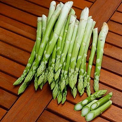 LIODER 50 Pcs Asparagus Seeds, Vegetable Seeds Garden : Garden & Outdoor