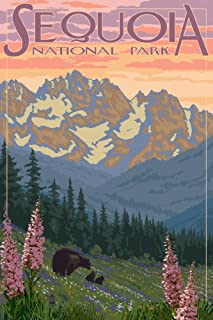 product image for Sequoia National Park, California - Spring Flowers (9x12 Art Print, Wall Decor Travel Poster)