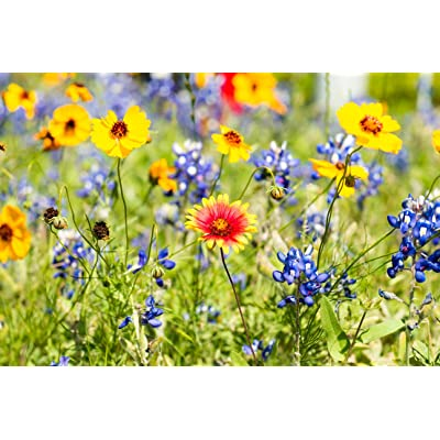 Drought Tolerant Wild Flower Seeds Kit - Open-Pollinated Bulk Flower Seed Mix for Beautiful Perennial, Annual Garden Flowers - No Fillers - Covers 20 sq ft. : Garden & Outdoor