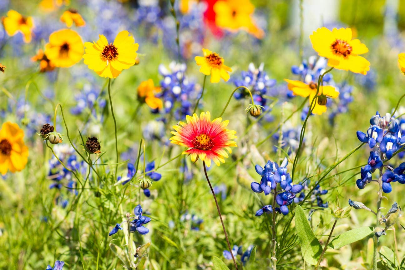 Drought Tolerant Wildflower Seeds Kit - Open-Pollinated Bulk Wild Flower Seed Mix for Beautiful Perennial, Annual Garden Flowers - No Fillers - Covers 10 sq ft.