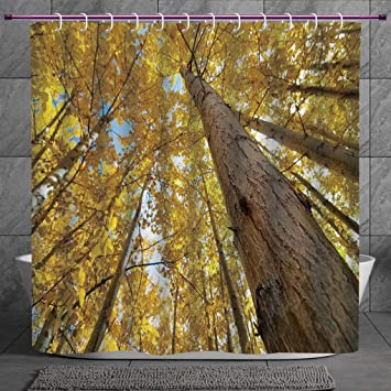 Cool Shower Curtain 2 0 Forest Home Decor Up View Of Fall Aspen Tree Leaves In Fade Tone Autumn Season Photo Image Yellow Digital Print Polyester Fabric Bathroom Set Amazon In Home Kitchen