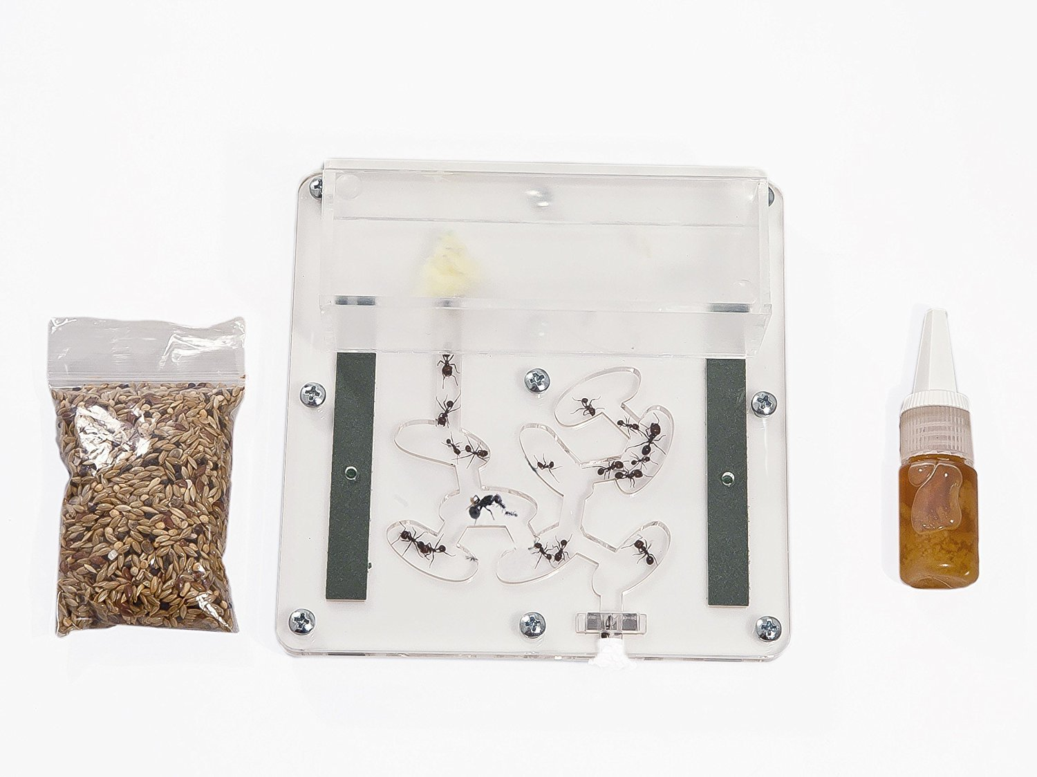 Ant Farm Educational Kit BIG (Free Ants with Queen) AntHouse