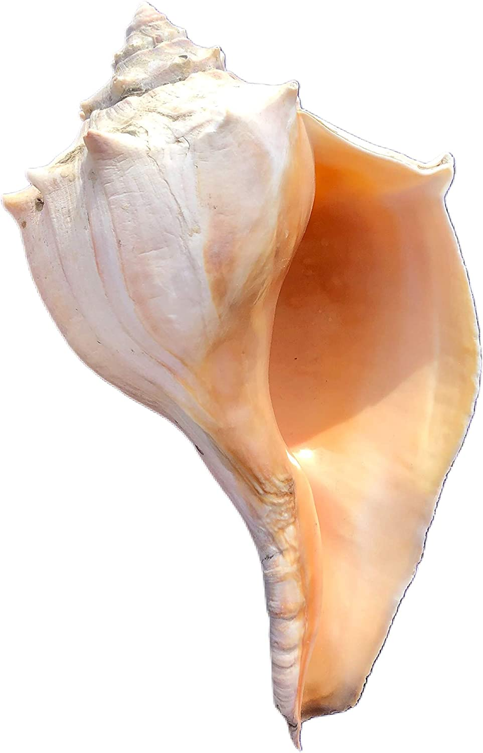 """8""""-11"""" 