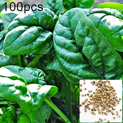 scgtpapadc Spinach Seeds, 100Pcs Spinach Seeds Easy Grow Farm Field Nutritious Vegetable Garden Plant, Flower Seeds Plant Seeds Spinach Seeds: Home & Kitchen