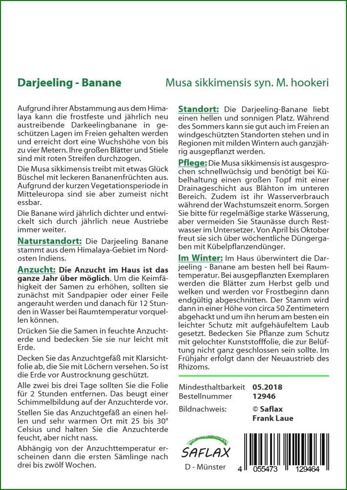 Musa sikkimensis Bananier de Darjeeling SAFLAX 5 graines