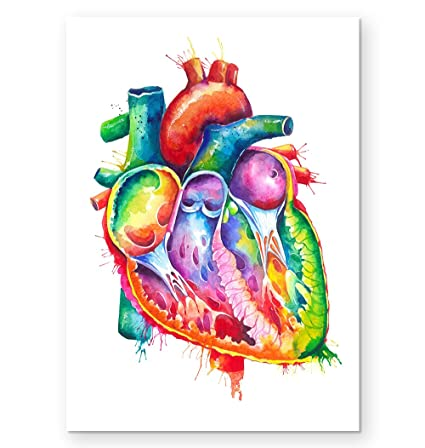 Amazon.com: Anatomical heart art print - Gift for doctors - Codex ...