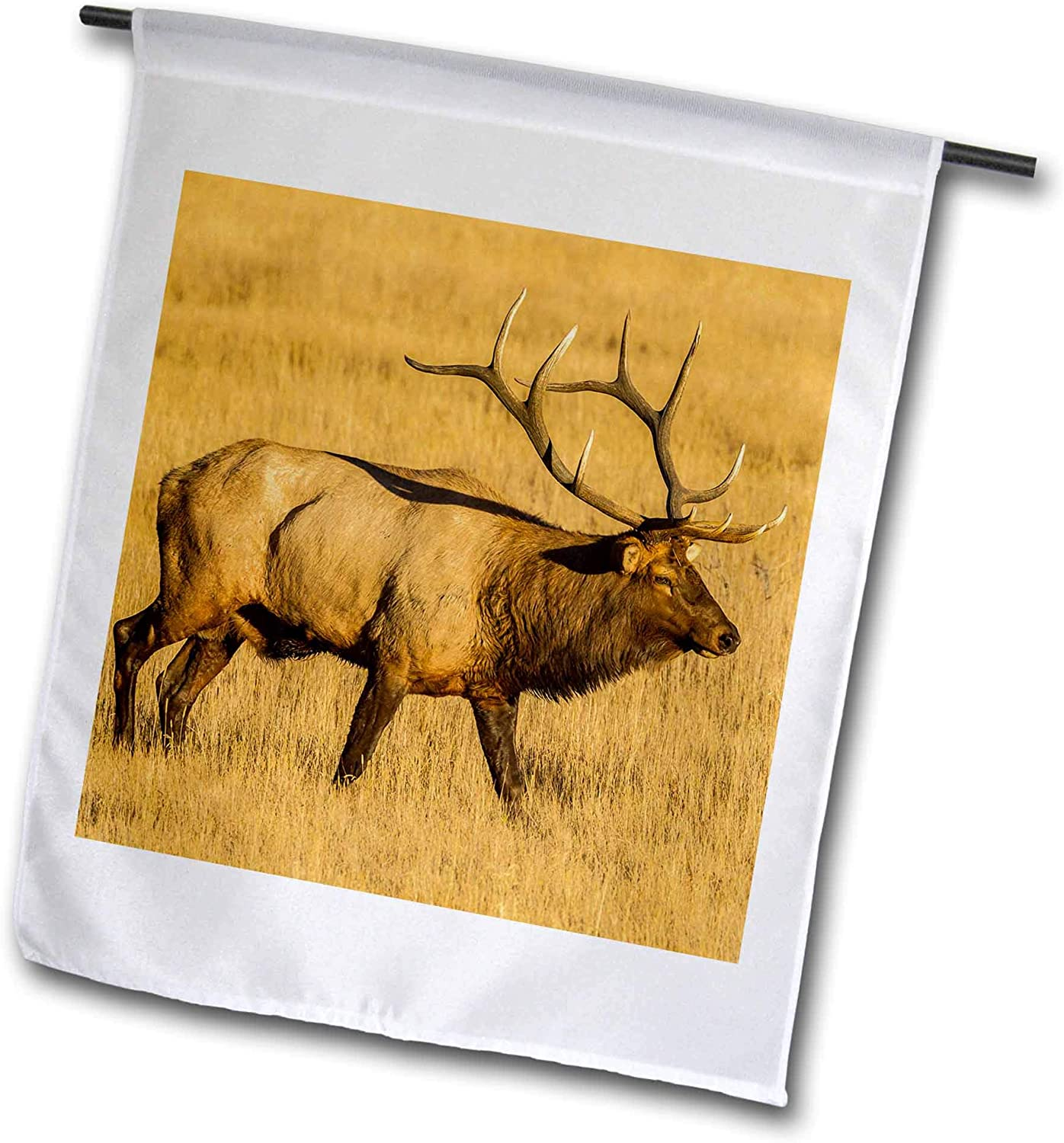 3dRose Danita Delimont - Elk - USA, Colorado, Rocky Mountain National Park. Male elk in Field. - 12 x 18 inch Garden Flag (fl_314738_1)
