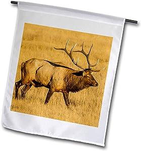 3dRose Danita Delimont - Elk - USA, Colorado, Rocky Mountain National Park. Male elk in Field. - 12 x 18 inch Garden Flag (fl_314738_1)