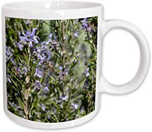 3dRose Honey Bee on Rosemary Blossom-Bee, Blossom, Flower, Honey Bee, Honeybee, Ceramic Mug, 15-Oz