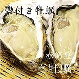 殻付き牡蠣 生牡蠣 生食用カキ | 三陸産 | 特大サイズ 12個 築地直送 かき【赤崎牡蠣30x12個】