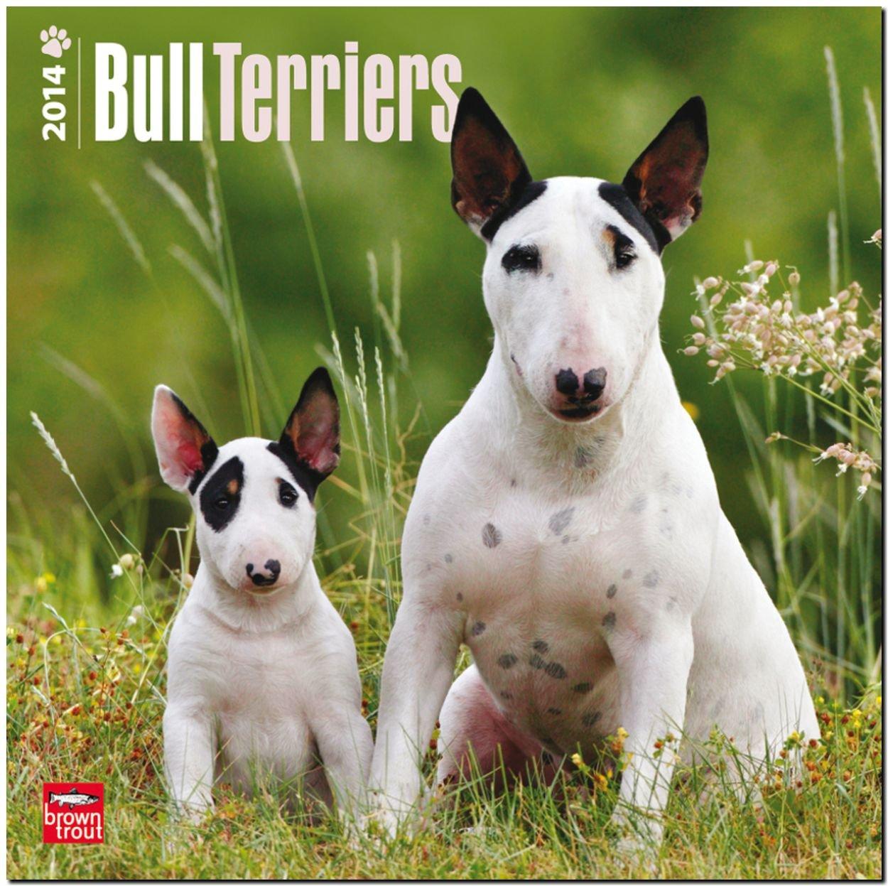 Bull Terriers 2014 - Bull Terrier: Original BrownTrout-Kalender [Mehrsprachig] [Kalender]