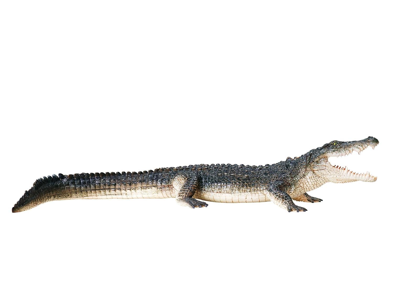 Revell X-Ray Crocodile Anatomy Models: Amazon.co.uk: Toys & Games