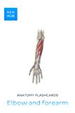 Anatomy flashcards: Elbow and forearm: Learn all bones, ligaments and muscles on the go (Kenhub Flashcards Book 6)