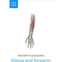 Anatomy flashcards: Elbow and forearm: Learn all bones, ligaments and muscles on the go (Kenhub Flashcards Book 6…