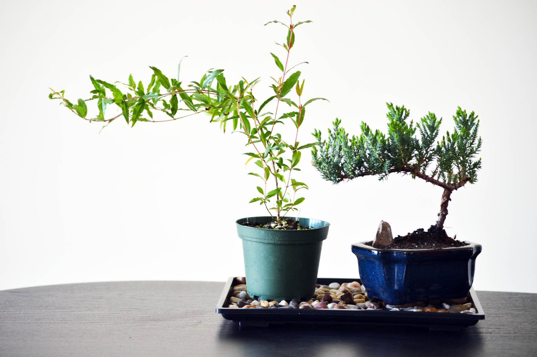 9GreenBox Bonsai Humidity Drip Tray with Pebbles Rocks, 8-Inch x 10-Inch
