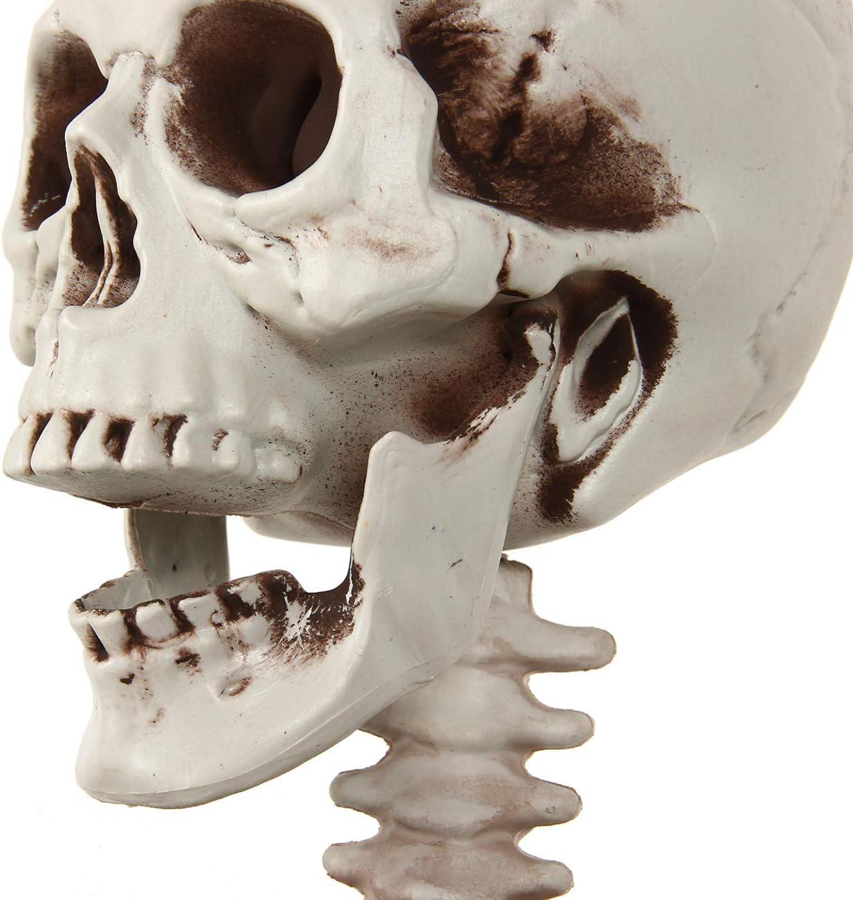 bottlewise Anatomical Skeleton Model Life Size 165cm Graveyard Bones Party Halloween Decoration Props # 1