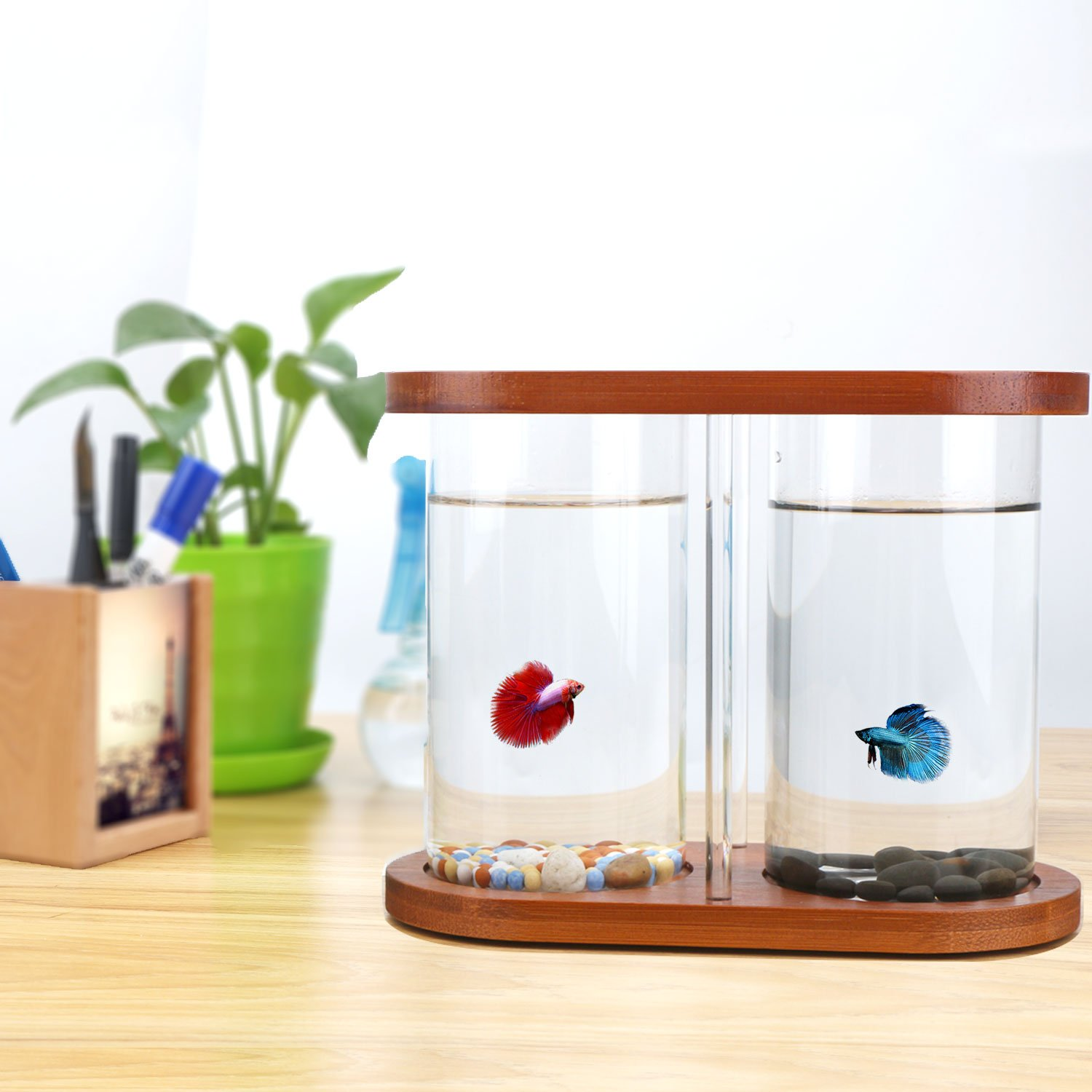 Segarty Cool Design Desktop Glass Fish Tank - Small Fish Bowls with ...