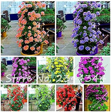 20 PCS Seeds Geranium Bonsai Perennial Flowers Plants Pelargonium Garden 2019 N