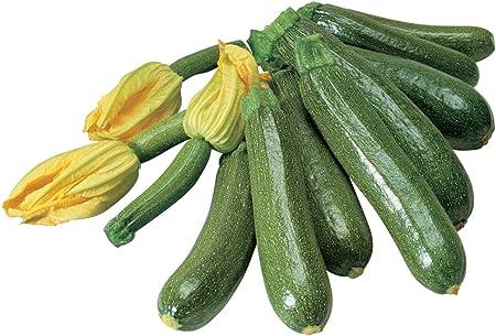 alpha-grp.co.jp Burpee Black Beauty Zucchini Summer Squash Seeds ...