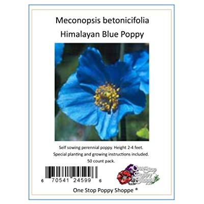 50 Poppy Flower Seeds. Himalayan Blue Poppies. Meconopsis Betonicifolia. One Stop Poppy Shoppe Brand. : Poppy Plants : Garden & Outdoor