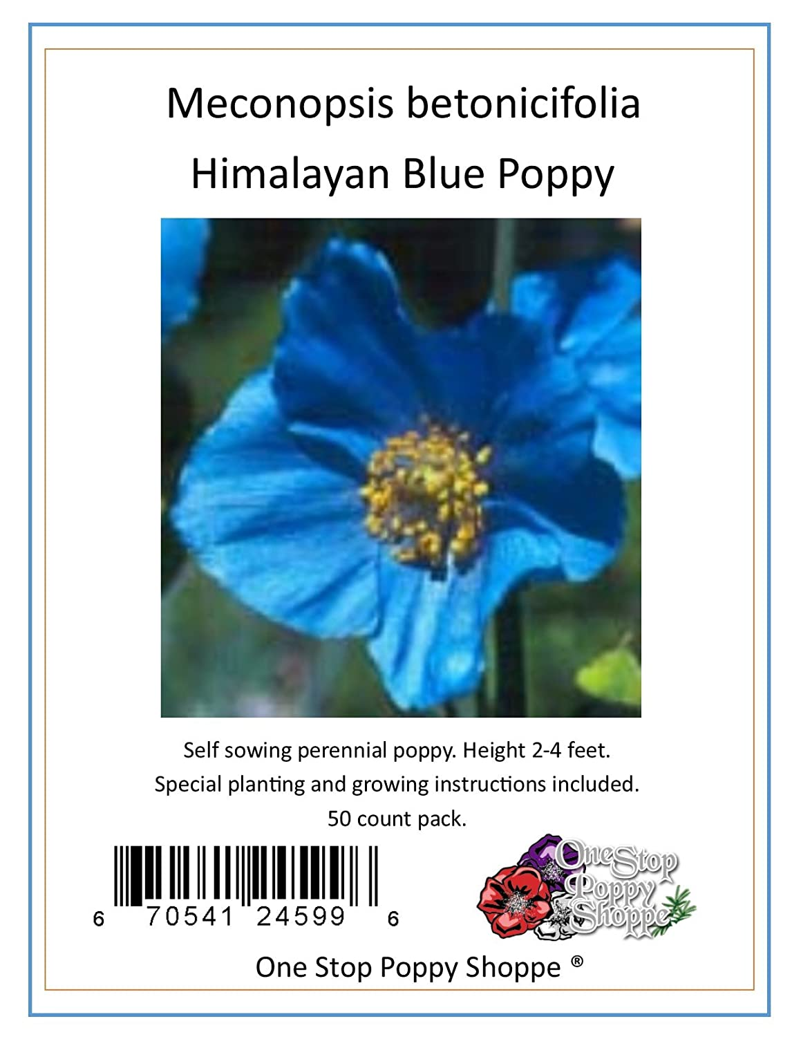 Amazon 50 Poppy Flower Seeds Himalayan Blue Poppies