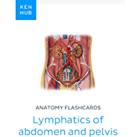Anatomy flashcards: Lymphatics of abdomen and pelvis: Learn all organs on the go (Kenhub Flashcards Book 15) (English…