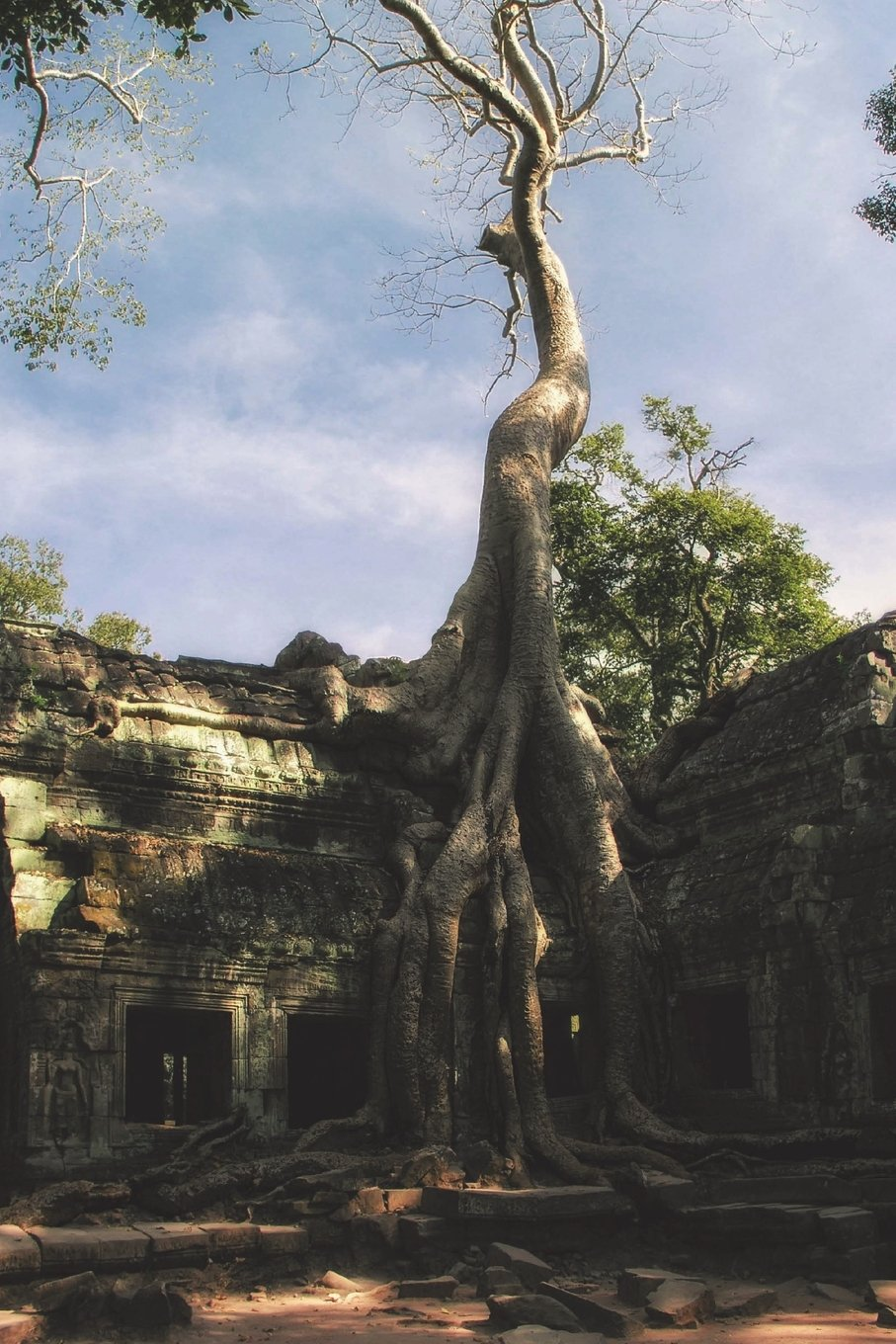 Read Online Ta Prohm Temple Angkor Wat Cambodia Journal: 150 page lined notebook/diary PDF