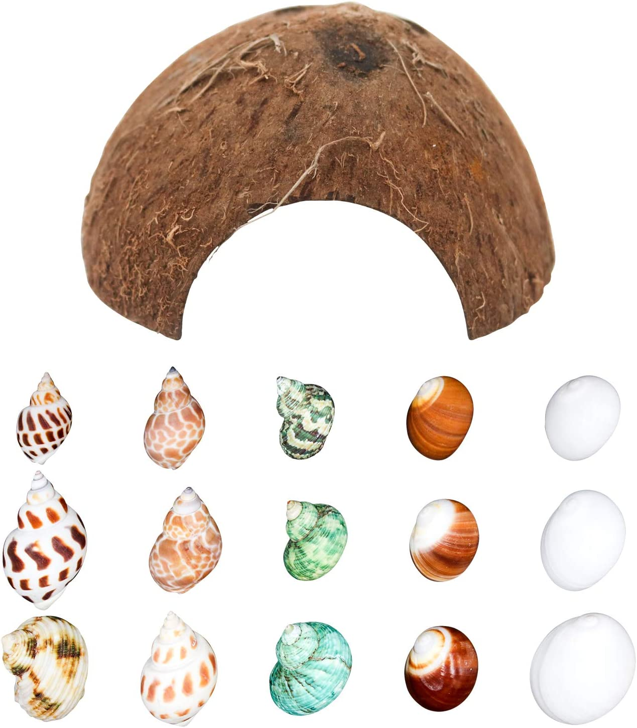 "Hermit Crab Shells/Turbo Shells/15Pcs Assorted Turbo Shells and 1Pcs Natural Coconut Hide Reptile Hideout/Seashell Opening Size 0.78""-1.57""-Handpicked Turbo Growth Seashell Natural Sea Conch"
