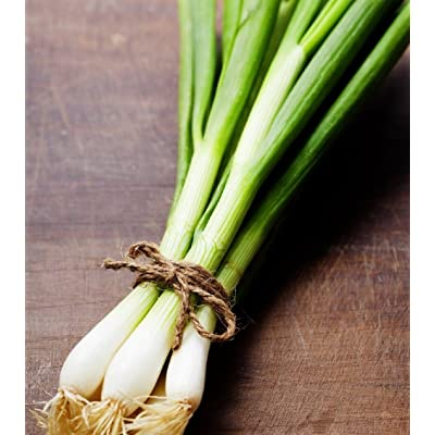 Hill Creek Seeds Evergreen Bunching Onions Seeds - Hardy Heirloom Scallions - Non-GMO 1, 000 Seeds : Garden & Outdoor