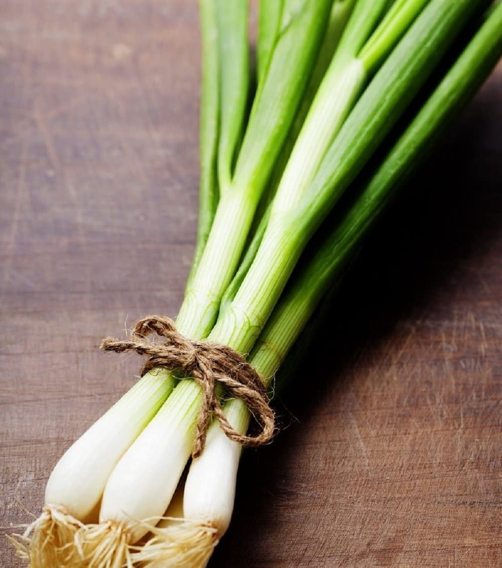 FREE SHIPPING NON-GMO Evergreen White Bunching Onion Seeds Scallions Heirlom