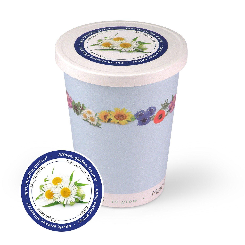 Blumen im Becher TO GROW - Gä nseblü mchen MacFlowers