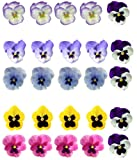 25 Mixed Colour Pansy Flower Edible Wafer Paper Cake Toppers By Top That